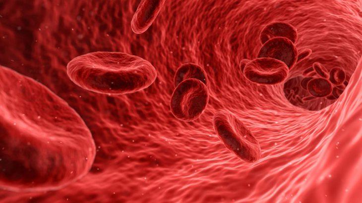 血管の老化とアンチエイジング